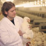 Diploma in Poultry Farming
